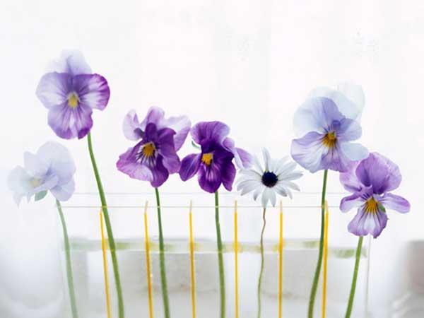 Сколько воды наливать цветам в вазу