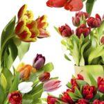 Как укрепить мягкие и полые стебли цветов