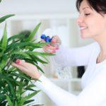 Как спасти домашние растения от жары