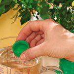 Правила удобрения комнатных растений