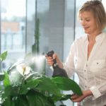 Как защитить комнатные растения от сухого воздуха