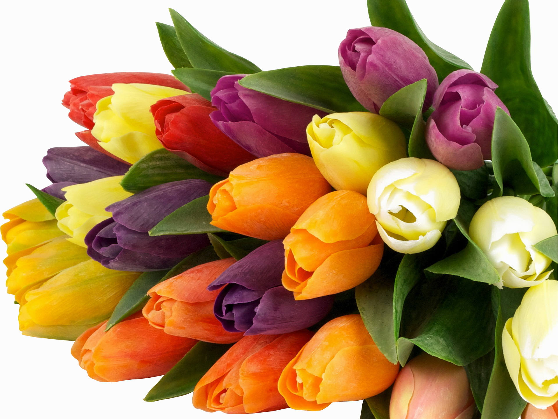 О чем расскажет оттенок тюльпана