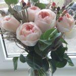 Розы Дэвида Остина – роскошь старинных садовых цветов